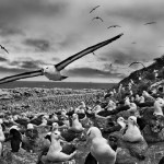 Sebastiao Salgado at the Natural History Museum