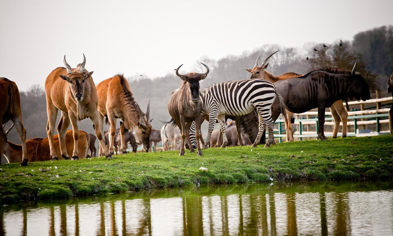 LL_ANIMALS_WATERING-HOLE
