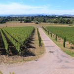 Languedoc wine tasting: B&B and Wine