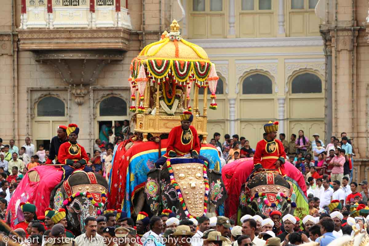 Caparisoned elephants lead the Dasara procession in Mysore, India. The procession starts from the Amba Vilas Palace (also known as Mysore Palace) on the tenth and final day of the Dasara Festival. The Procession led by an elephant carrying a golden howdah winds through the streets of the city and ends at Banni Mantap. Groups of performers, musicians and artists from around Karnataka participate in the celebration. The Dasara festivities can be traced back to the Puranas. The very first Dasara in the history of Mysore state can be traced back to the Mahnavami of the Raja Wadiyar in 1610, celebrated at Sriranapatnam. The celebrations honour the victory of the Hindu godess Chamundeswari over the buffalo headed demon Mahishasura.
