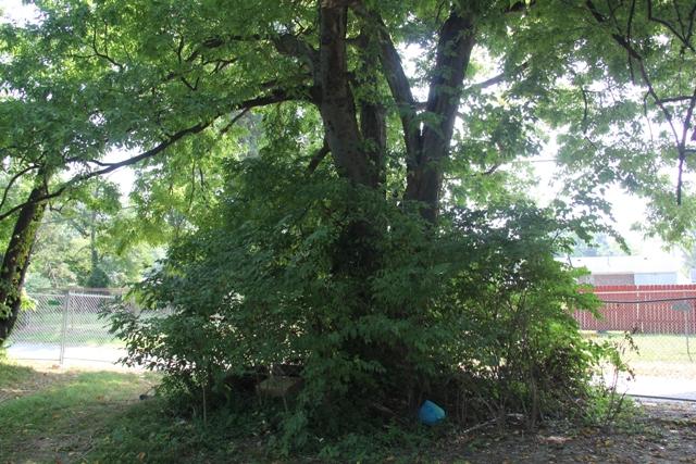 Ali home tree