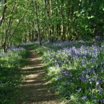 National Forest Way Opens. Longest walking trail in Britain.