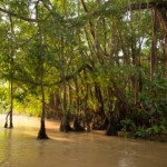 World Land Trust Saves Bornean Rainforest