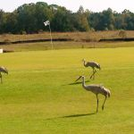 The Golf Courses of Central Florida