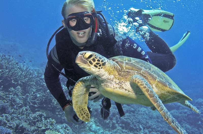 gallery-mid-diver-turtle