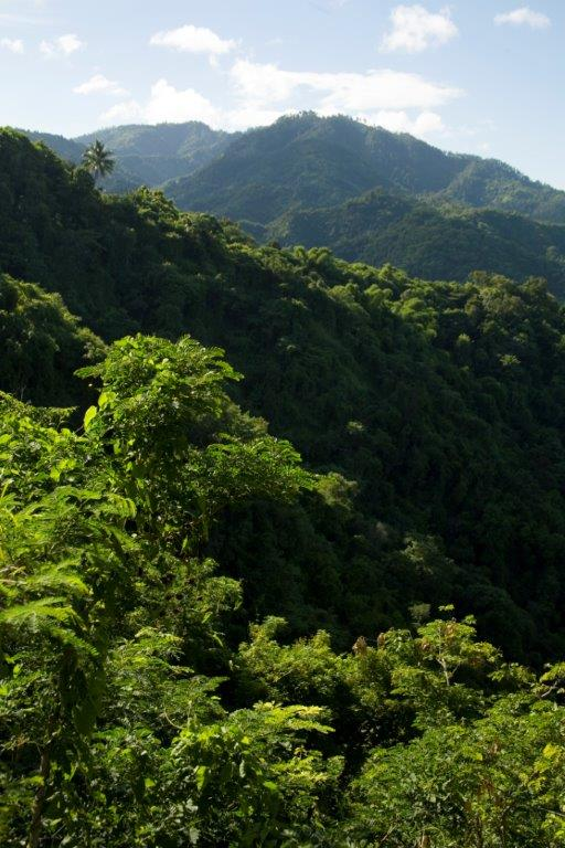 kn_at_Blue Mountains3 (1)