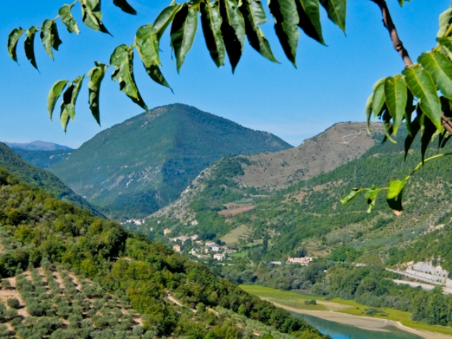 olive-groves