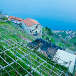 Touring Campania Wineries