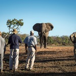 The Wild Side of Zambia