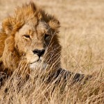 A Photo Safari in Botswana